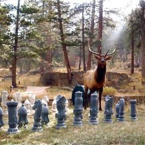 Elk wanders through chess game