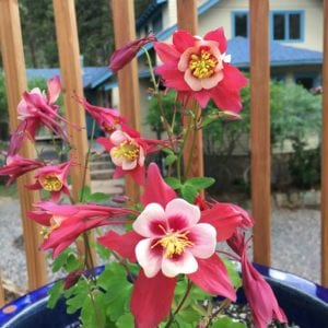 potted flowers in bloom