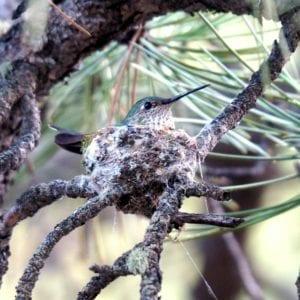 Hummingbird at Riversong